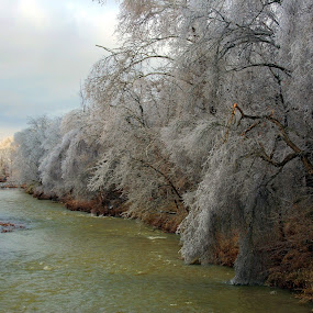 Ice Storm 2009 by Becky Patlan-Garcia - Landscapes Weather ( pwcwinter, ice storm, trees, river, arkansas )