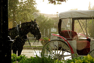 Photo: The cart before the horse, Niagra on the Lake