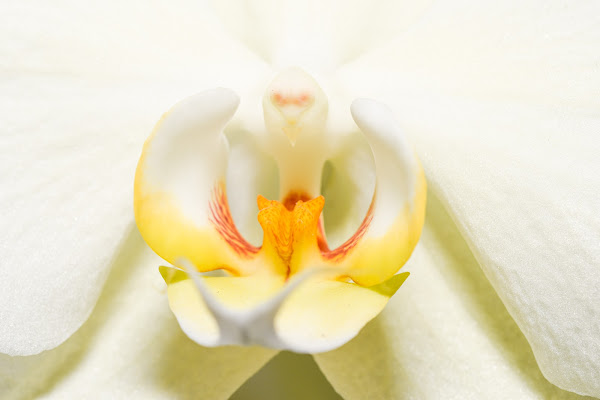 Orchidea  di DiegoCattel