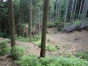 沢の右側の林道を降りていく