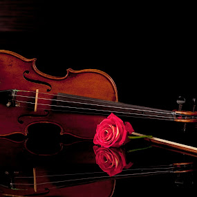Violin and rose by Cristobal Garciaferro Rubio - Artistic Objects Musical Instruments ( music, rose, reflection, violin, musical )
