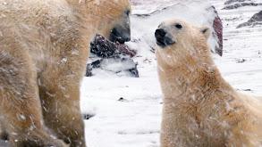Devon Island: Land of Ice thumbnail