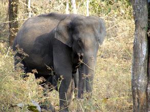Photo: Wild elephants at Nagarahole