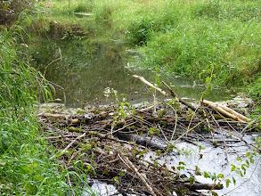 Photo: Beaver dam after repair
