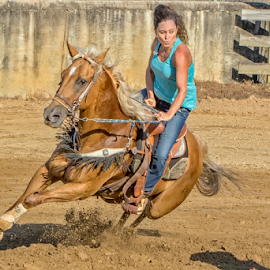 Barrel Racer 4 by Joe Saladino - Sports & Fitness Rodeo/Bull Riding ( horse, barrel race, compeition, animal, girl )