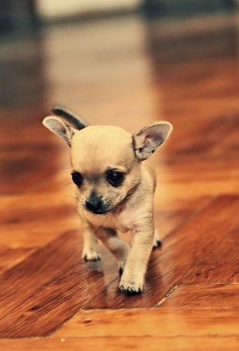 かわいい犬の壁紙