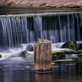 The Riverbank by Phil Robson - Nature Up Close Water ( nature, pool, waterfall, rocks, river,  )