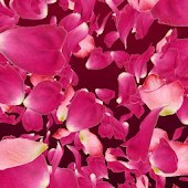 VA Petals 3D
