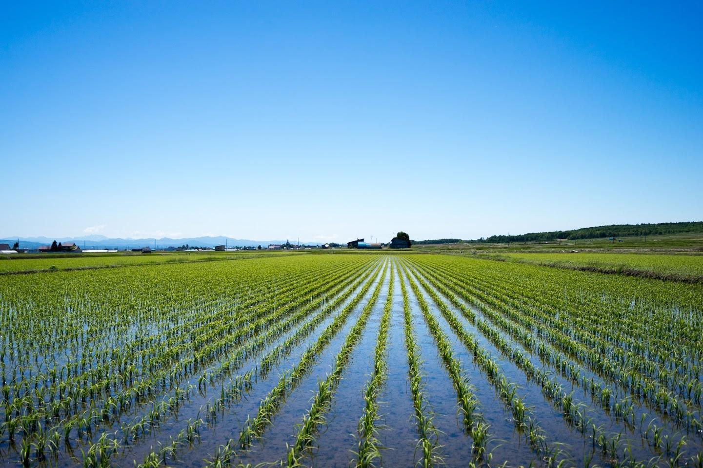 緑の田園風景