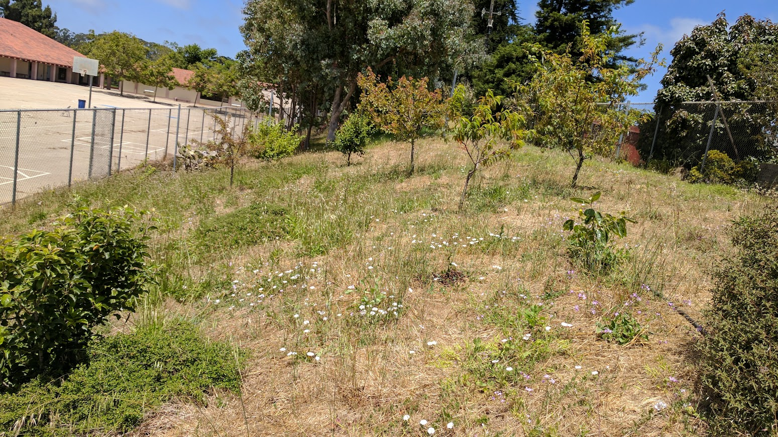 Ohlone Garden Photos