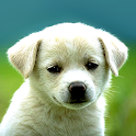 Puppy Wallpapers – HD Backgrounds icon