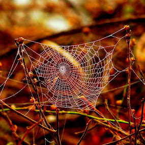 hunting Net by Nani Garu - Nature Up Close Webs ( fresh, dew, web, morning, net )