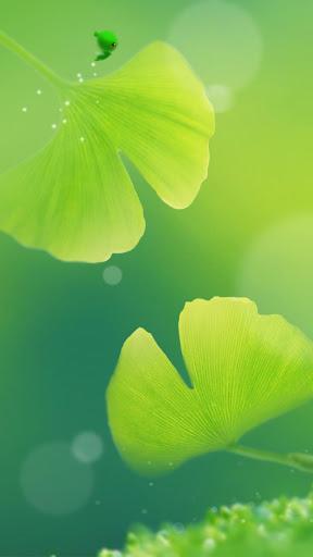 嫩綠杏葉動態桌布