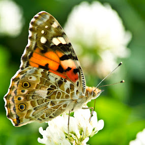 Butterfly 3 by Irfan Maulana - Novices Only Flowers & Plants