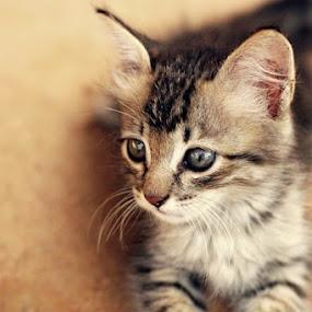 Kucing by Roziyah Mahamad - Animals - Cats Portraits