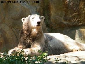 Photo: Knut auch :-)