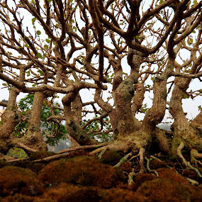 TREE ROOTS.. by Ajit Kumar Majhi - Nature Up Close Other plants (  )