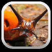 App Icon for Terrestrial Mollusc Key App in Czech Republic Google Play Store