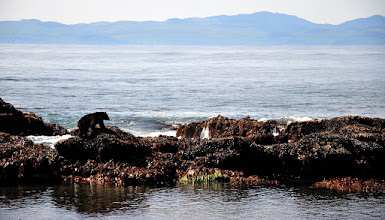 Photo: This photo was taken in June at Botanical Beach on Vancouver Island. Every December we make an annual trip there for photoadventures, wanders, wonders, and general mirth. Which means I'll be going back there soon ;)