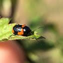 Cylinder beetle