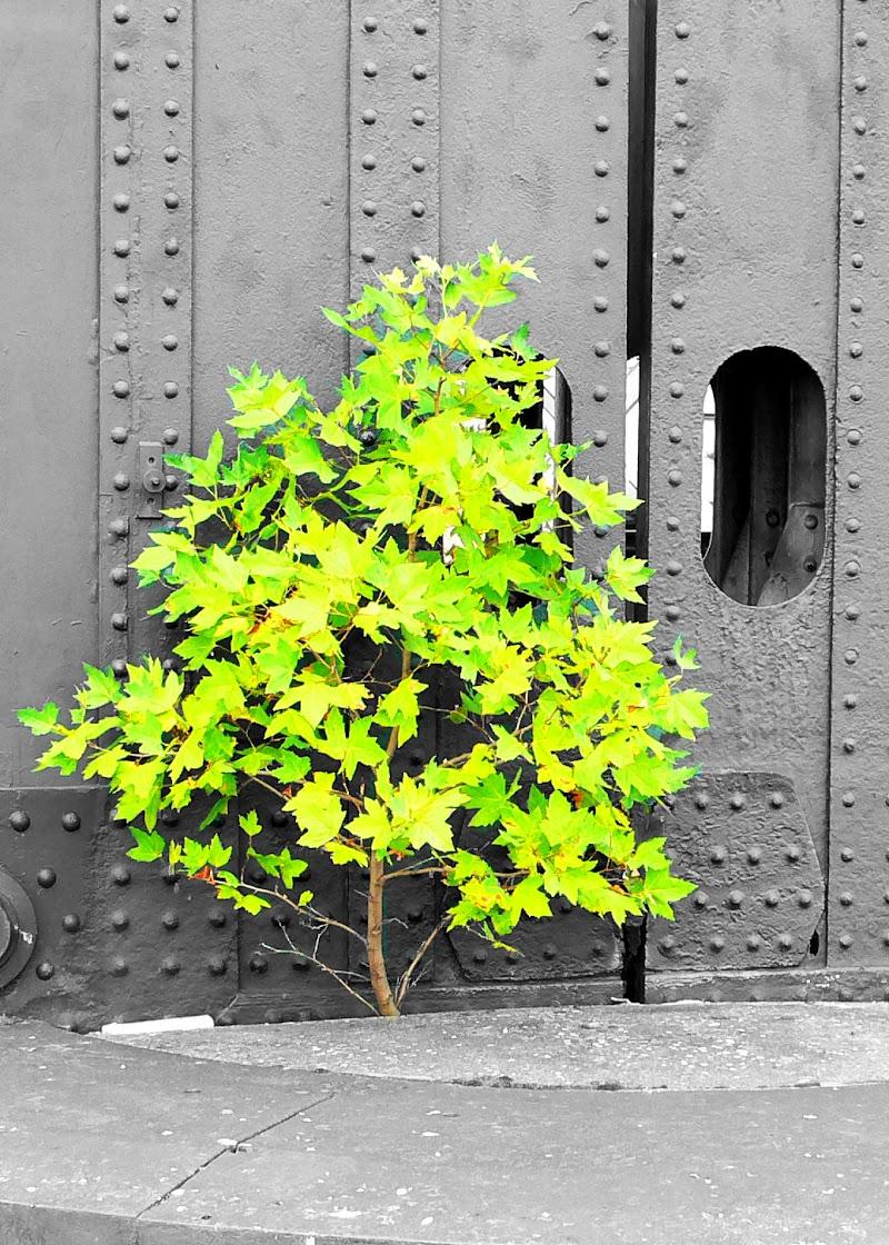 Verde Voglia di Vita di vincenzo_v