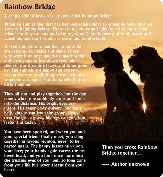 rainbow bridge all animal pet care