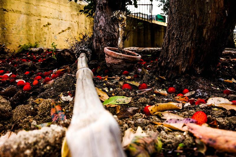Corbezzoli d'autunno di SuMommotti