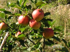Photo: vom kleinen Baum