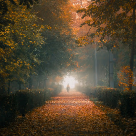 by Alex Jitaru - City,  Street & Park  City Parks