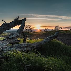 Tree Stumps and Sunsets by Michael Mercer - Nature Up Close Trees & Bushes