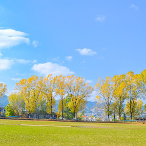 Autumn Trees by Hassan Malghani - Landscapes Cloud Formations ( autumn, trees, autumn colors, landscape, colours,  )