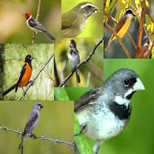 Todos Cantos Pássaros Brasileiros - náhled