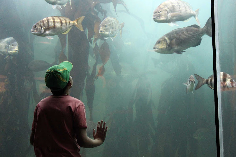 A visitor to the Cape Town Aquarium is transfixed by  the local sea life.