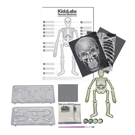 Contenido de 4M Esqueleto Humano
