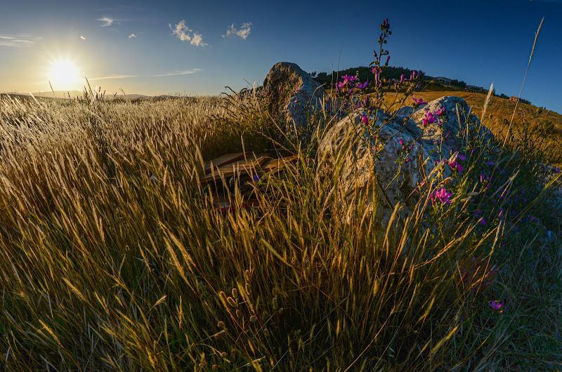 Terra al tramonto di Diana Cimino Cocco