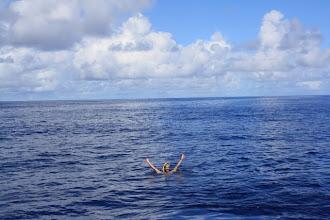 Photo: Kaspar swimming in the open ocean