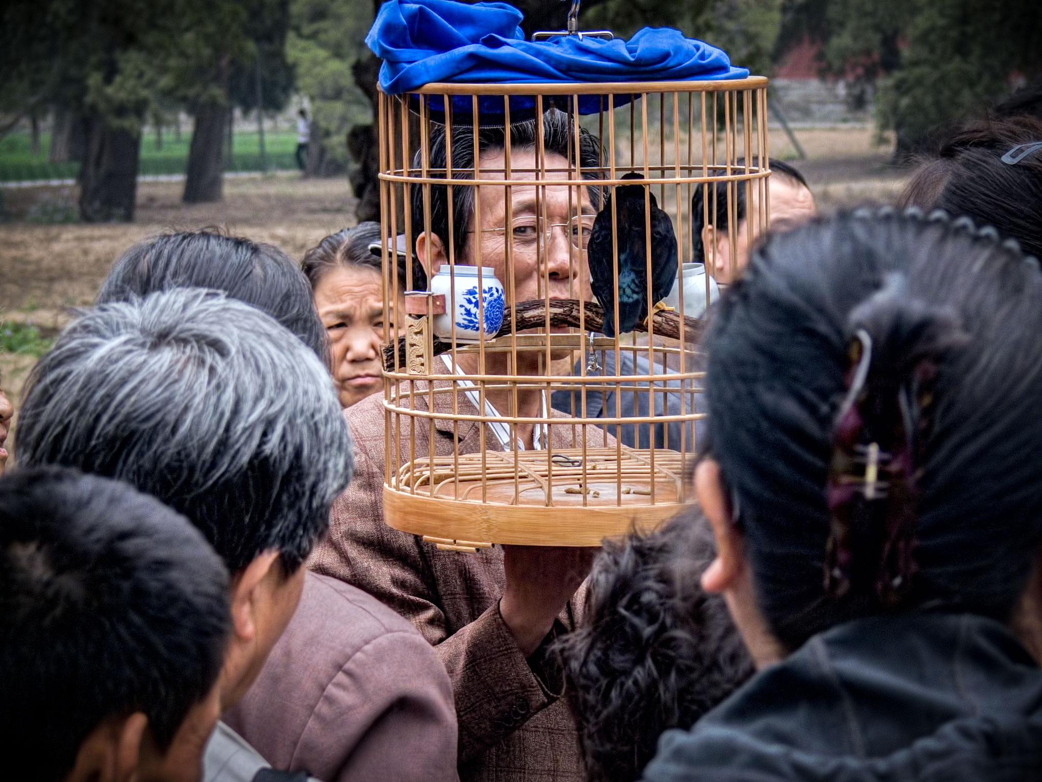 Photo: The Bird Trainer The captive learns comfort from its captor.  In the park-like grounds surrounding the Temple of Heaven in Beijing there are several areas where people gather socially. Among the things one might see would be various musicians playing, artists demonstrating their talents and organized exercise, something like line dancing.  There was a small crowd gathered around the man who was holding up a cage with a bird in it. I'm not sure exactly what was special about the bird, or the man, but the social dynamics were quite interesting to watch. I kind of assumed that the bird had been trained in some manner, perhaps to sing or to talk.  #Travel  #China  #Beijing  #TempleOfHeaven  #TalkingBird