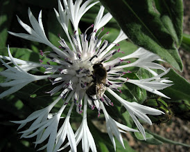 Photo: kwiat