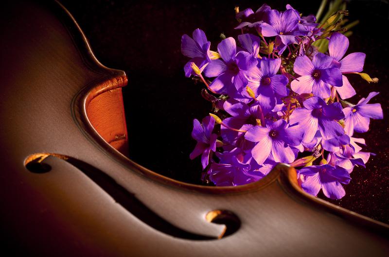Viola e viole  di Giovanni Rodà
