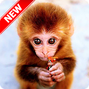 Monkey Wallpaper‏