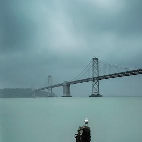 Seagull by Artem Kevorkov - Landscapes Weather ( exposure, clouds, seagull, california, weather, bridge, bay bridge, san francisco, rain )