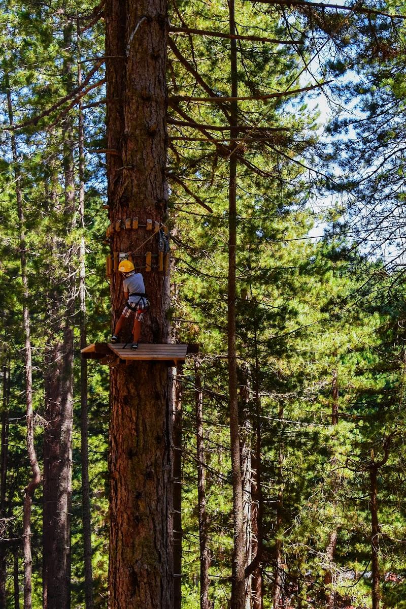 Avventura tra gli alberi! di EttorePh