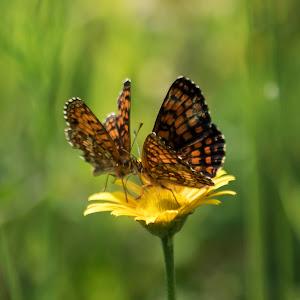 2 leptira.jpg