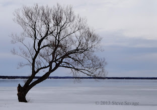 Photo: This tree is one of the first things you see when you get to Brown's Bay. That's the United States of America across the water and ice.