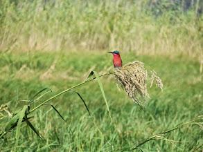 Photo: unknown bird