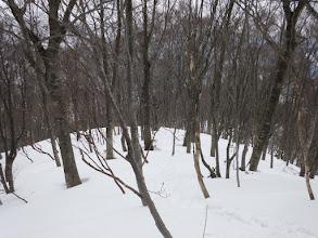 木々の密度が濃く