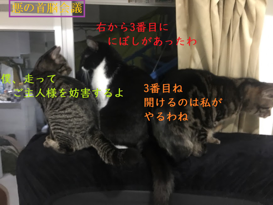 慌てず騒がず叱らずに!猫と乳幼児の同居について