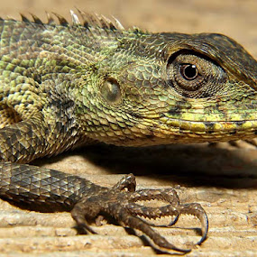 ANGRY by Deddy Setiawan - Animals Reptiles