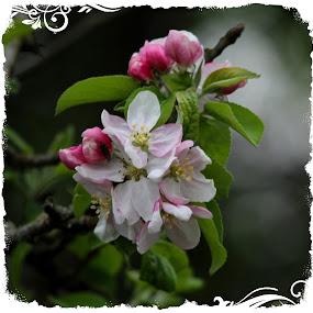 by Sandra Lee - Flowers Single Flower