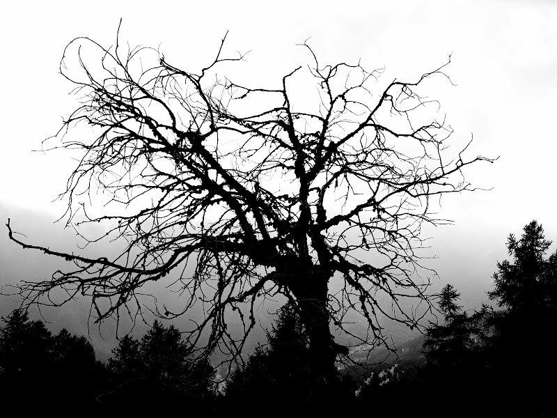 Inferno di Dante la selva dei suicidi di Agnus-ge
